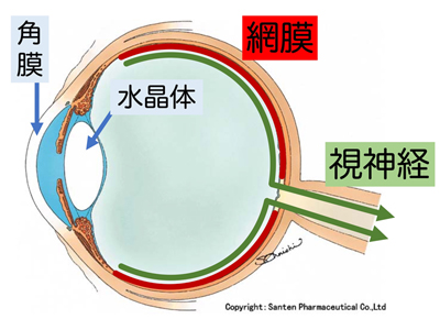 圧 が 高い 眼